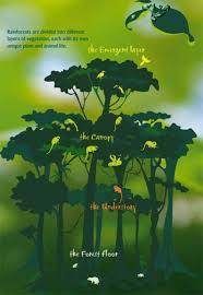 Adaptations Of Tropical Rainforest Plants - rainforest strata layers homeschool resources pinterest