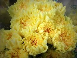 Wholesale Carnations Best 25 Yellow Carnations Ideas On Pinterest Yellow Flowers