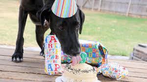 dog birthday party ksdk here s why i throw my dog a birthday party every year