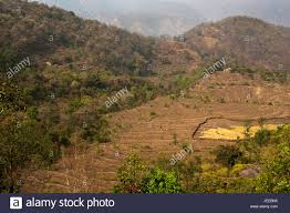 A Place Jim Remote Kot Kendri In The Kumaon A Place Made