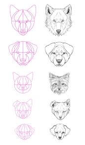 how to draw animals dogs and wolves and their anatomy