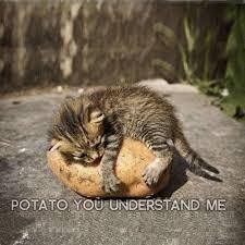 Funny Animal Memes Tumblr - memes vault funny animal memes from tumblr sweet pinterest