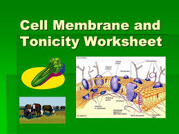 cell membrane and tonicity worksheet ppt download