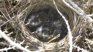 Tumbleweed Home Nestlings In A Tumbleweed Home Semester On A Ranch