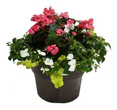 Flowers For Window Boxes Partial Shade - hanging baskets and potted plants at flambeau view greenhouse