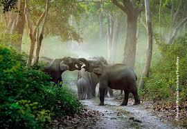 anuradha marwah elephaus maximus jpeg
