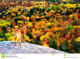 fall colors royalty free stock photo image 34423745