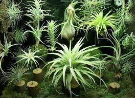 shop light for growing plants terrarium led grow light kits flexfire leds inc