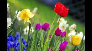 Image Of Spring Flowers by Images Of Spring Flowers Youtube