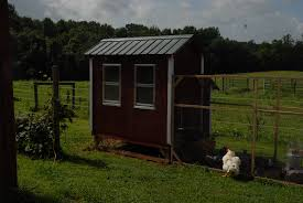 backyard chickens at the beegracious farm beegracious farm