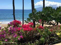 native hawaiian plants for sale how to grow hawaiian flowers at home growing hawaiian flowers