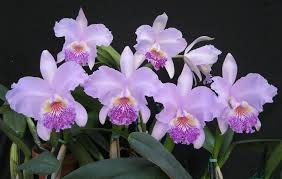 orchids pictures chadwick orchids inc powhatan virginia