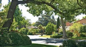 sacramento trees environmental benefits of trees sutter park