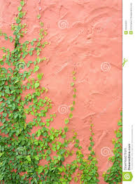 ivy or climbing plant on retro color concrete wall stock photo