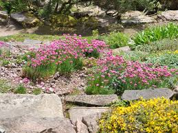 Small Garden Rockery Ideas Small Rockery Garden Ideas Small Rockery Designs Garden Rockery