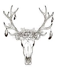 deer skull black white sketch illustrations drawing cow skull