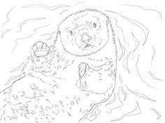 otter coloring pages http designkids otter coloring pages