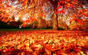 autumn pictures nd871 hd widescreen wallpapers for desktop and mobile