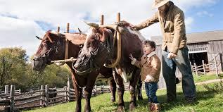 a yankee thanksgiving tour oliver kelley farm mnhs