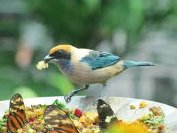 i love to see birds in my front yard this article gives wonderful