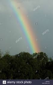 rainbow trees sky colors coulors weather stock photo royalty free