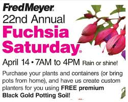 fred meyer fuchsia event on saturday 4 14