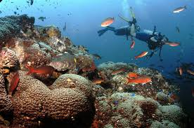 the coral reefs you never heard of in the path of trump u0027s