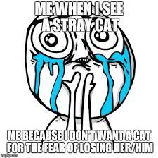 Cuteness Overload Meme - cuteness overload rage face memes imgflip