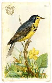 546 best birds images on pinterest animals bird art and crows