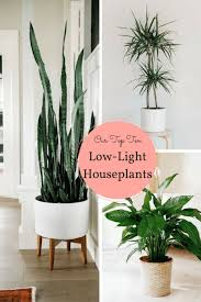 10 Houseplants That Don T Need Sunlight Leedy Interiors