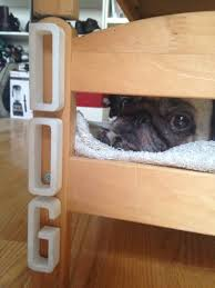 Bunk Bed For Dogs Articles With Laundry Cabinets For Sale In Sydney Tag White