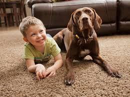 Rug Cleaning Washington Dc 24 7 Carpet Cleaning Services Washington Dc 202 656 5835
