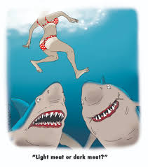 swimming with sharks cartoon cluestolife
