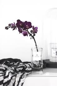Fashionable Home Decor Fashion And Home Decor Black And White Refresh Trendsurvivor