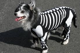 Halloween Cat Skeleton Top 5 Adorable Pet Costumes This Year U0027s Halloween