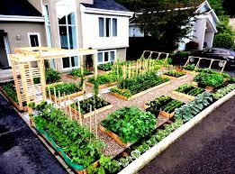 vegetables gardening at home wonderful front yard vegetable