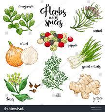 spices herbs vector set prepare delicious stock vector 521793568