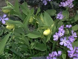 the 25 best rock garden plants ideas on pinterest rock plants