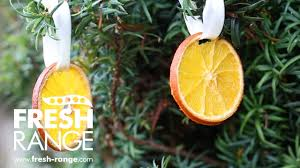 how to make dried orange decorations youtube