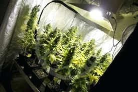 chambre de culture complete cannabis armoire cannabis chambre chambre de culture complete cannabis