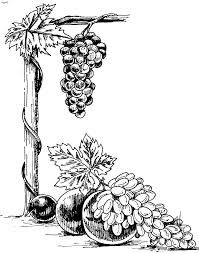 grapes coloring pages for kids fruits and vegetables pinterest