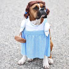 dog costume wizard of oz leo u0027s first halloween jillian harris
