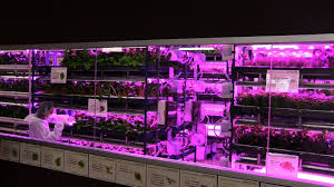 grow lights for indoor herb garden urban vegetable garden system with led lighting diginfo youtube