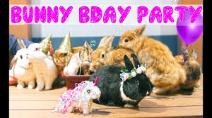 rabbit party i threw my rabbit a birthday party