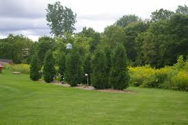 creative design landscaping trees best 22 tree shade landscaping