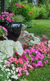 shade container plants and garden decor pinterest shades