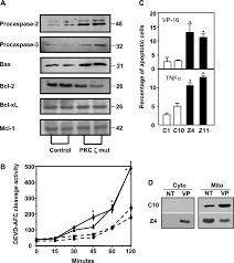 atypical protein kinase c ζ as a target for chemosensitization of