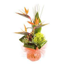 captivating birds of paradise arrangements bouquet