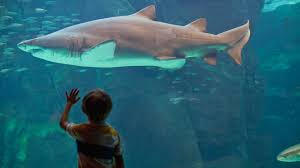 12 cute kid products for shark week