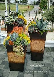 Tropical Potted Plants Outdoor - 717 best cactus and succulents images on pinterest succulent